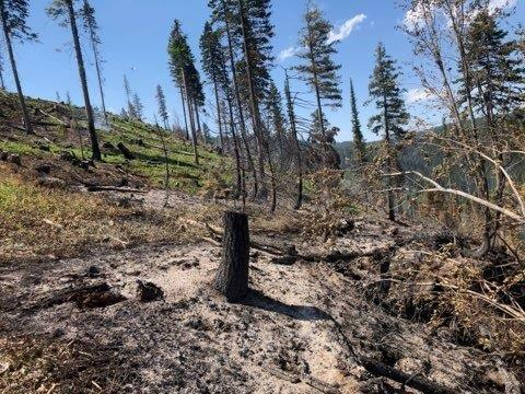 Incident Photo for the 2Umatilla NF Prescribed Fire
