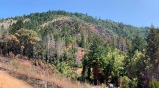 Incident Photo for the Milepost 21 Fire