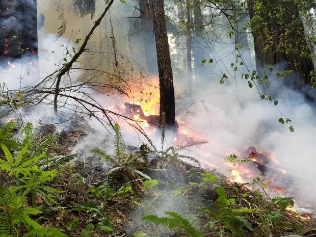 Incident Photo for the Big Hollow Fire