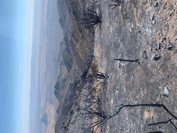 Incident Photo for the Virgin Mountain Fire