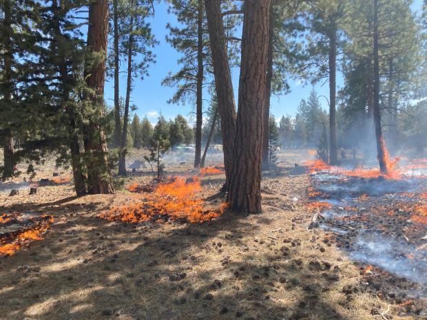 Incident Photo for the Klamath NF RX Burning 2020/2021 Fire