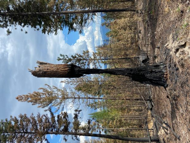 Incident Photo for the Walker Creek Fire